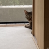 DIYクラフト・和室の畳に帆布を敷いて出入り自由な猫の部屋